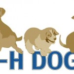 4-H Dogs