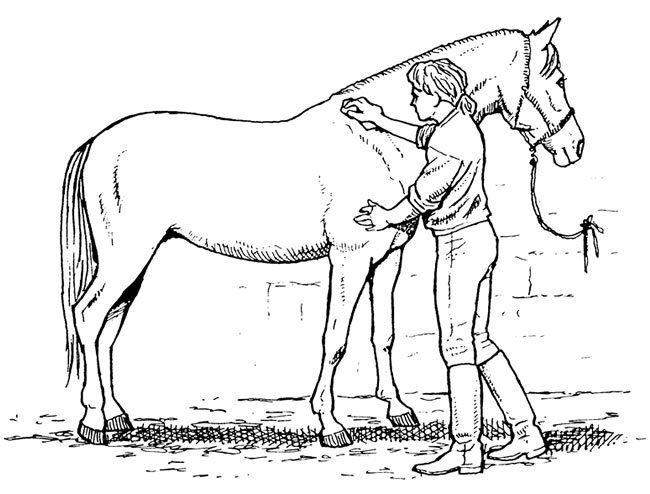 Care for your horse