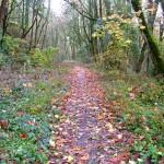 Beautiful Walking Path